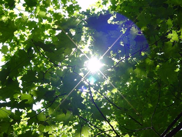 chlorophyll leaves jpg
